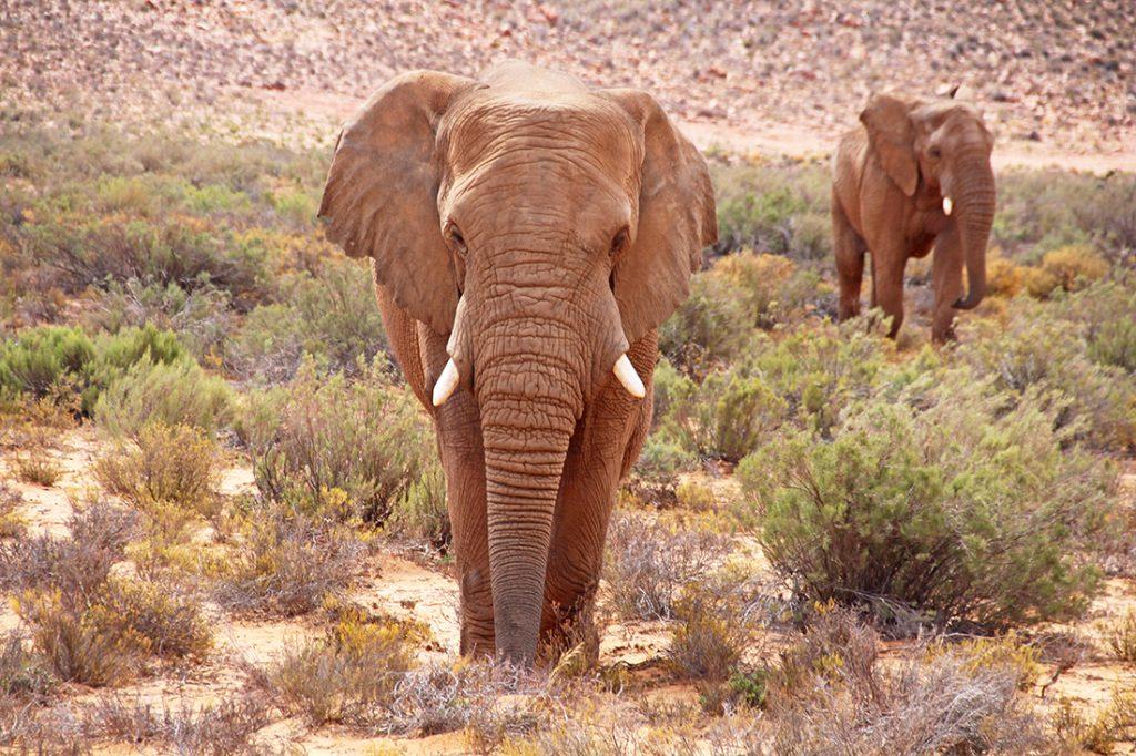 Südafrika: Unsere erste kleine Safari