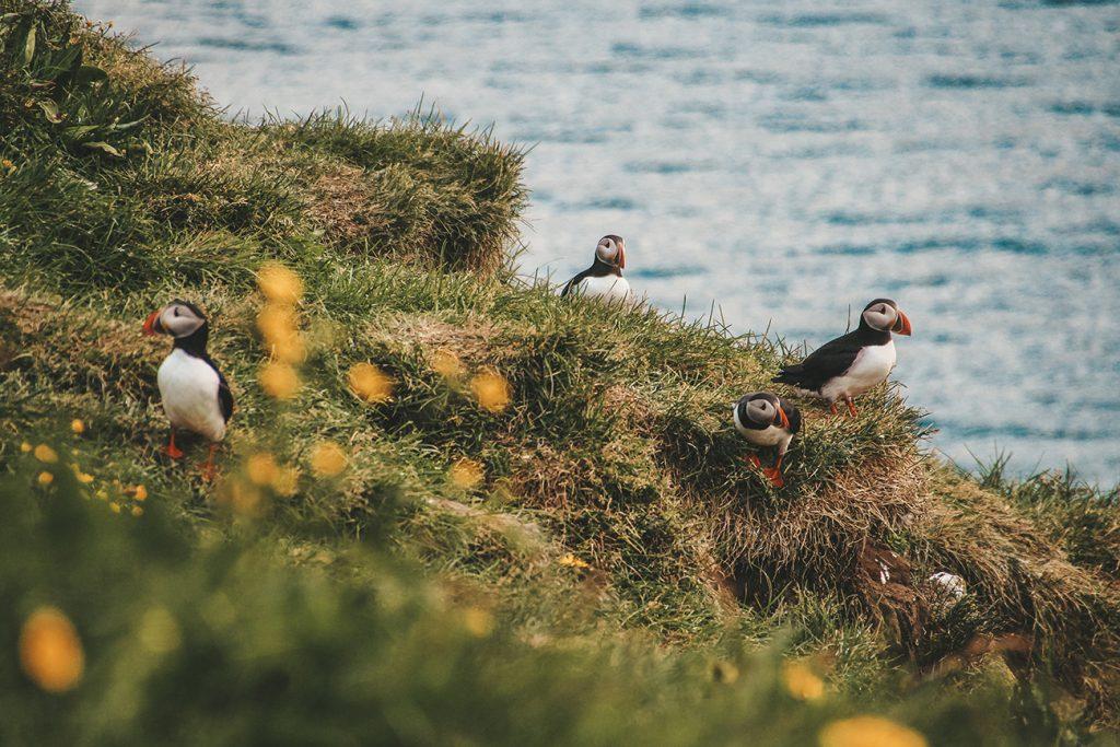 Islands Osten – Putzige Papageientaucher und faszinierende Fjorde